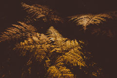 Fern Leaves secado Foto de archivo