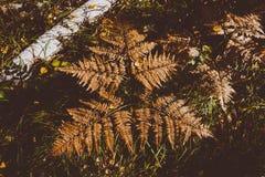 Fern Leaves secado Foto de archivo libre de regalías