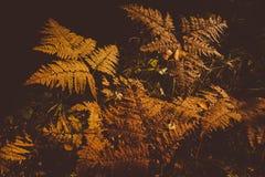 Fern Leaves secado Fotografía de archivo libre de regalías