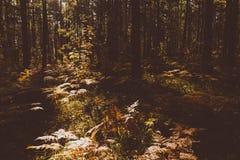 Fern Leaves secado Imagen de archivo