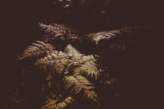 Fern Leaves secco Fotografie Stock Libere da Diritti