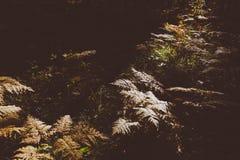 Fern Leaves secco Fotografia Stock