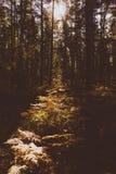Fern Leaves secco Fotografia Stock Libera da Diritti