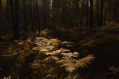 Fern Leaves secco Immagine Stock