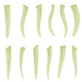 Fern leaves. Set. For design. Nine pieces Stock Images