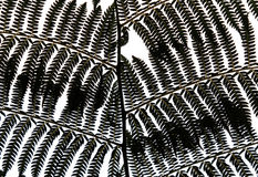 Fern Leaves Silhouette Stock Image