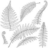 Fern Leaves Sketch Royalty Free Stock Photos