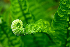 Fern leaves in spring on a sunny day Stock Photos