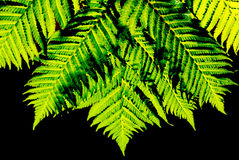 Fern leaves in the sunshine Royalty Free Stock Photos
