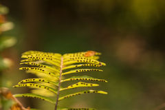 Fern leaves, taken under strong morning sunlight Royalty Free Stock Image