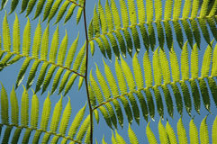 Fern leaves - Tenancious Stock Photography