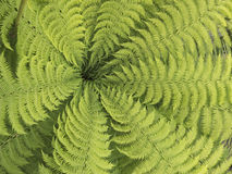 Fern leaves. With tips leading to one central point Stock Image