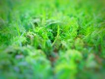 Fern Leaves verde bonito no jardim imagem de stock royalty free