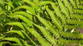 Fern leaves stock video