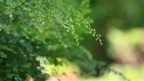 Fern leaves in the garden stock video footage
