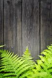 Fern leaves on wooden background. With copy space for your text Royalty Free Stock Photos