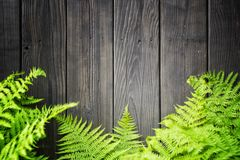 Fern leaves on wooden background. With copy space for your text Stock Photos