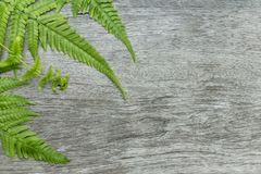 Fern leaves on wooden background. Fern plants are not flowering. And reproduction by spores released from the undersides of the fronds. with copy space for your Royalty Free Stock Image