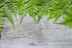 Fern leaves on wooden background. Fern plants are not flowering. And reproduction by spores released from the undersides of the fronds. with copy space for your Royalty Free Stock Photography