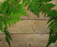 Fern leaves on a wooden background. Fern leaves lying on a wooden background Stock Photography
