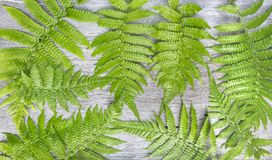 Fern leaves on wooden background. Fern plants are not flowering. And reproduction by spores released from the undersides of the fronds. with copy space for your Stock Photography