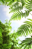 Fern leaves in the woodlands Stock Photos
