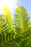 Fern leavs Stock Images