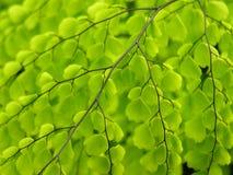 fern liści, zdjęcia stock