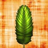 fern liści papirus ilustracji
