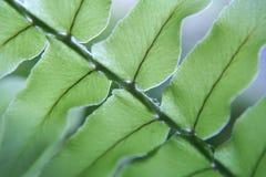 fern liści, obrazy stock