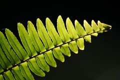 Fern in lighting Royalty Free Stock Photos