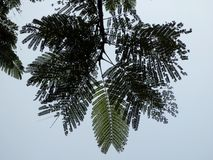 Fern like tropical tree in Vietnam Royalty Free Stock Photos