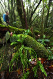 Fern many specie in tropical jungle rain forest,Khaoluang Nation Stock Photography