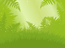 Fern Meadow Royalty Free Stock Image