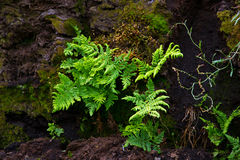 Fern growing from peat soil Stock Photos