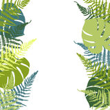 Fern and monstera background. Vector illustration of Fern and monstera background Stock Photos