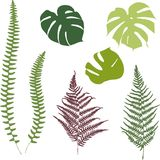 Fern and monstera silhouettes. Isolated on white background Royalty Free Stock Photos