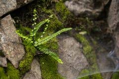 Fern and moss macro on limestone. Road trip through georgia in springtime fern and moss macro on limestone stock photography