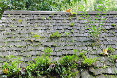 Fern, moss and plant growing on the old roof Royalty Free Stock Image