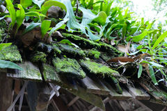 Fern, moss and plant growing on the old roof Stock Image