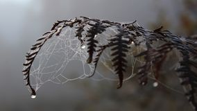 Fern-n-web at foggy morning royalty free stock images