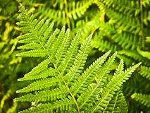 Fern, Nature, Green, Plant, Forest Stock Photo