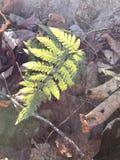 Fern. New York Nature Stock Photos