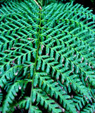 Fern in Norway Stock Image