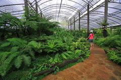 Fern nursery royalty free stock photo