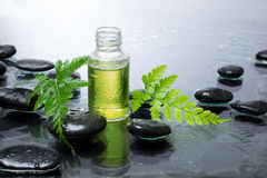 Fern, oil and black stones. For massage royalty free stock photo