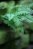 Fern on old wall stock photography