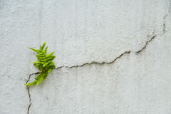 Free Fern On Vintage Wall, Fern Background And Empty Area For Text, Nature On White Background Stock Photo - 61760270
