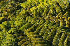 Fern palm tree texture background royalty free stock image