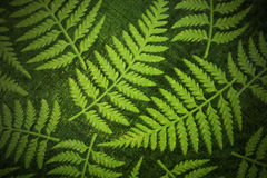 Fern paper background. Nice fern or plant pattern, print on paper, with vignetting for dramatic effect, great ecology, bio or other organic wallpaper Stock Photo